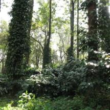 plantaion 5