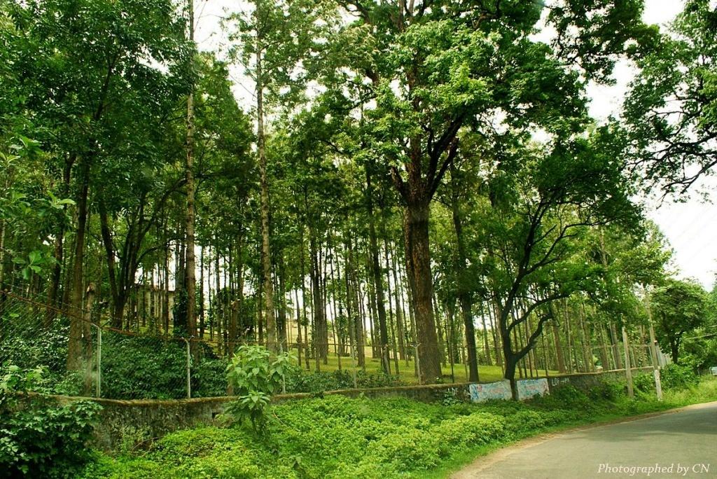 Marayoor_forest!