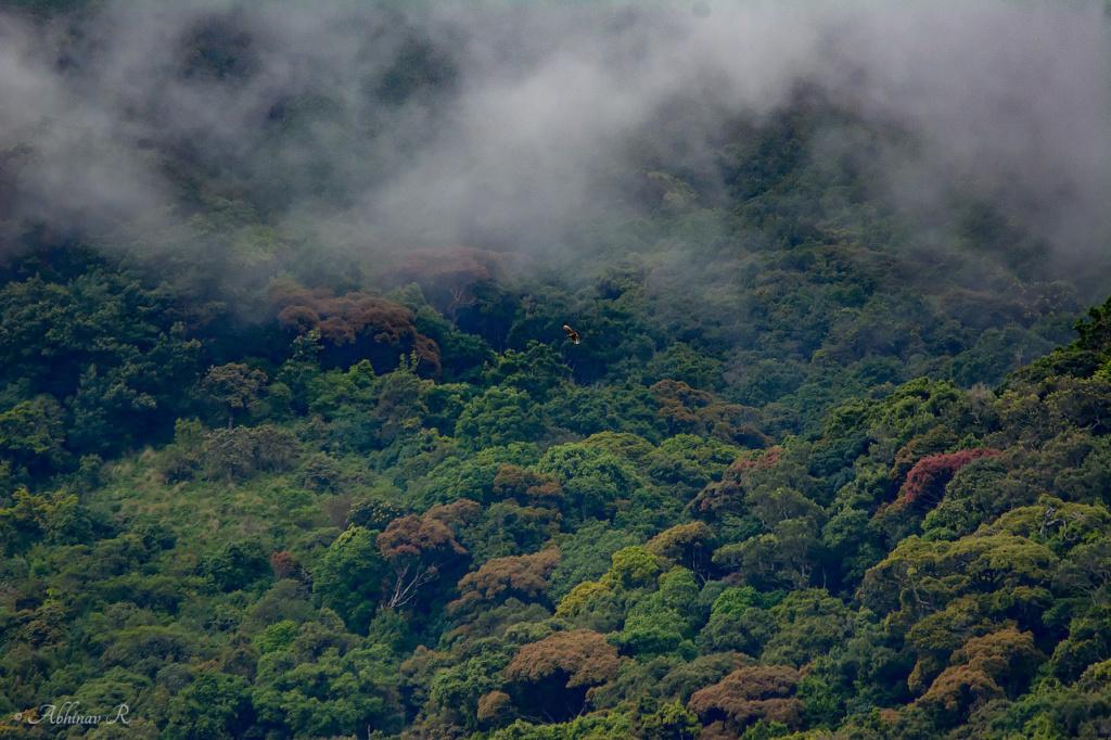 Pampadum-Shola-National-Park-ABC_4205