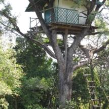 TREE HOUSE ,earumadam