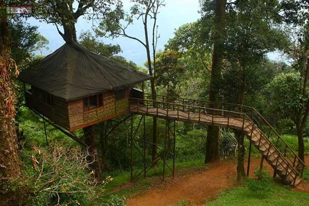 tree house 4