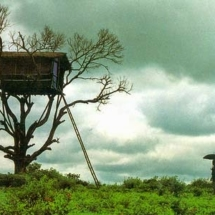 tree house banner1