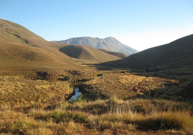 eravikulam Grassland