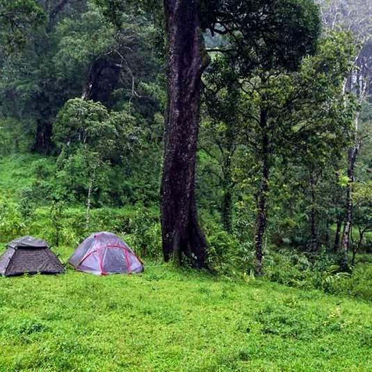forest camping2