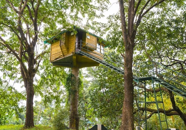 tree house6